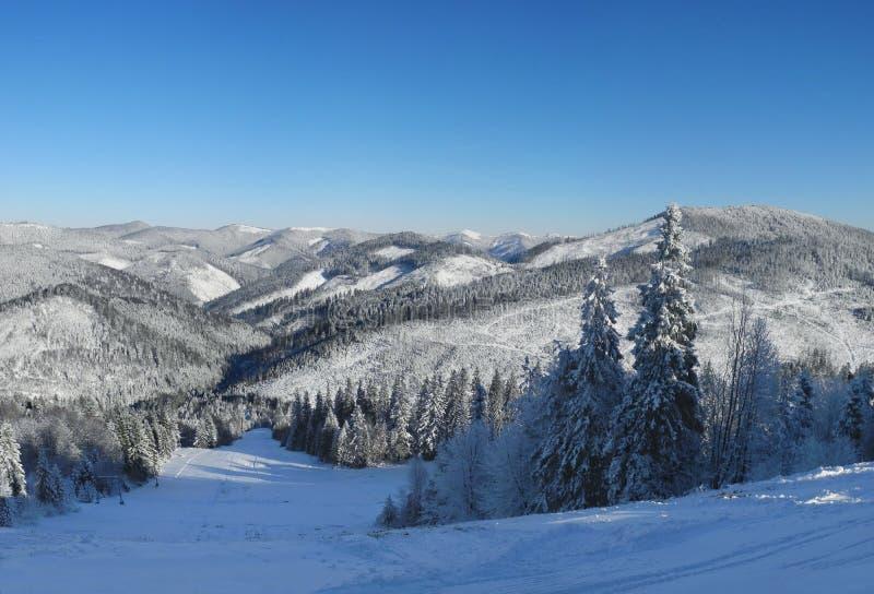 De winterbos en bergen met verse sneeuw wordt behandeld die Alpiene skii royalty-vrije stock foto