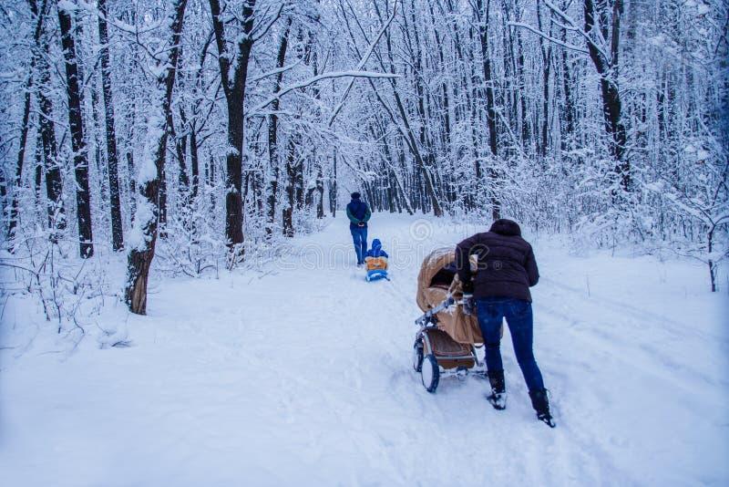 De winterbos onder de sneeuw Januari-ochtendgang door de bosfamiliegang in de winterpark royalty-vrije stock afbeelding