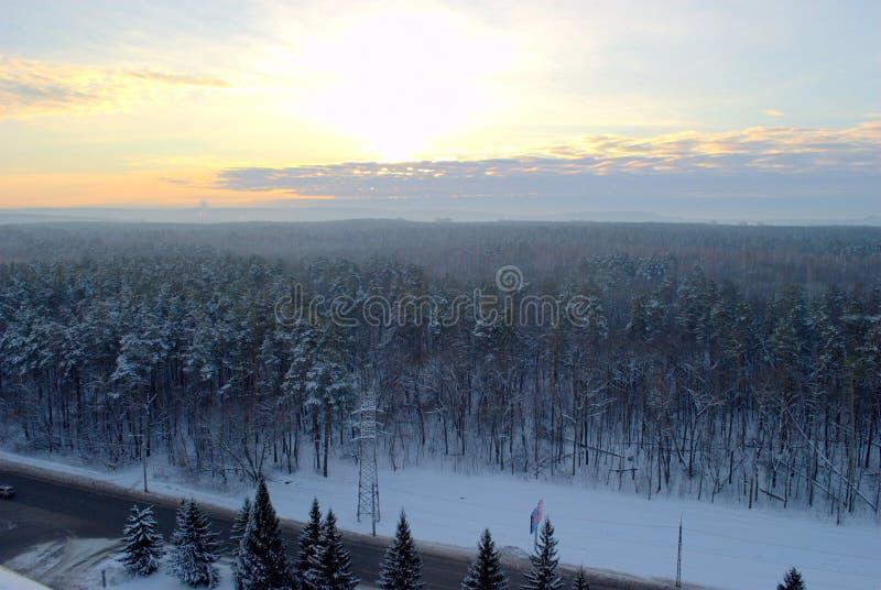 De winterbos op de rand van de stad van Togliatti in de stralen van de het toenemen zon stock afbeeldingen