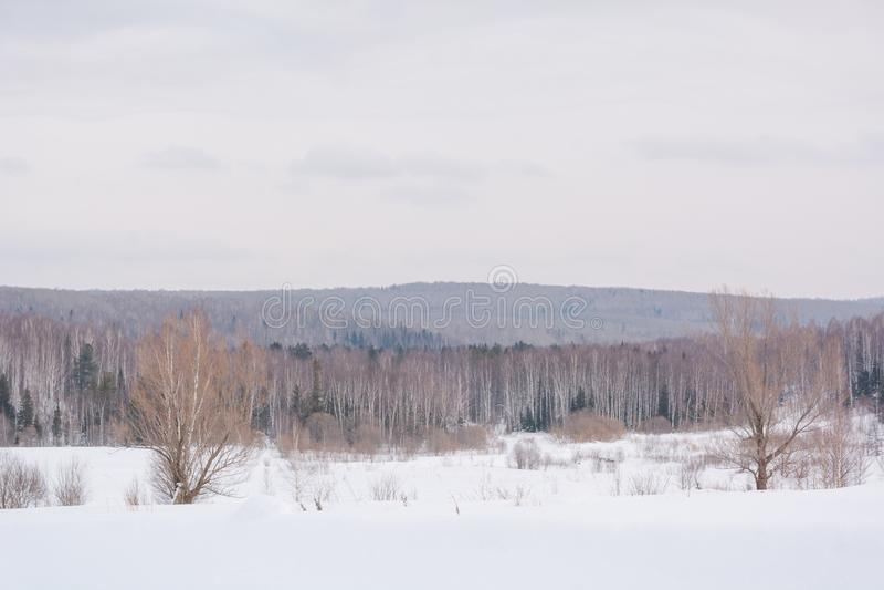 De winterbos, taiga Bos in de winter in Siberië Taigapijnbomen in de winter Bomen onder de sneeuw stock afbeelding