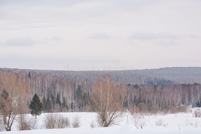 De winterbos, taiga Bos in de winter in Siberië Taigapijnbomen in de winter Bomen onder de sneeuw royalty-vrije stock fotografie