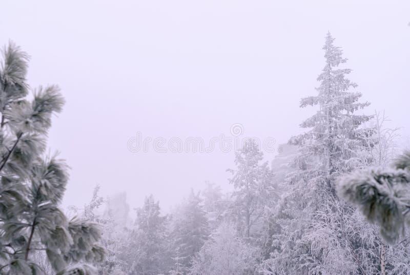 De winterbos tijdens een sneeuwval stock afbeeldingen
