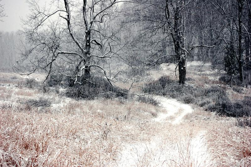 De Winterbos van de sneeuwweg tijdens Blizzard stock afbeelding