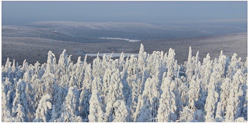 De winterbos in zonlicht stock foto's