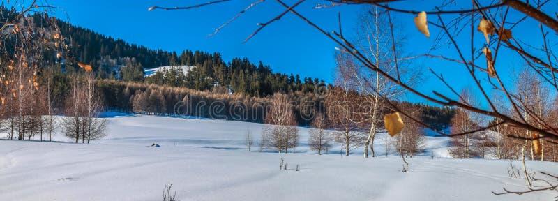 De winterbosje stock afbeeldingen