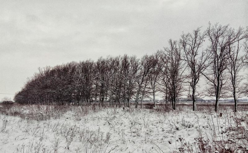 De winterbosje in het platteland royalty-vrije stock foto