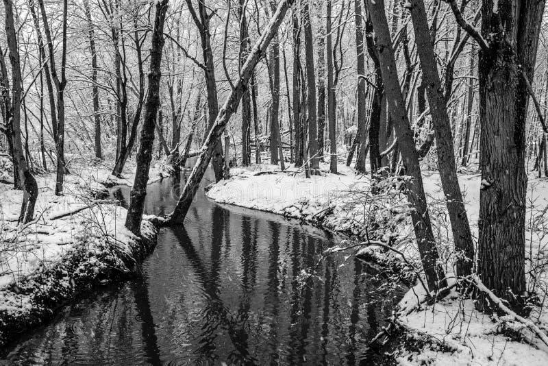 De winterbossen stock afbeelding