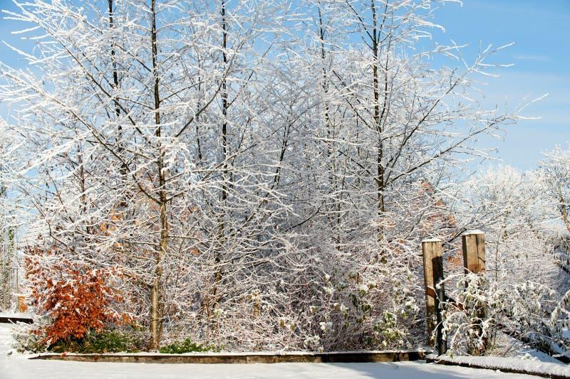 De winterdag in het land royalty-vrije stock foto
