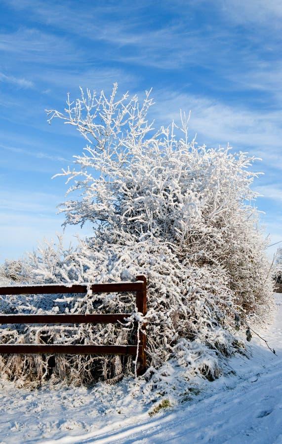 De winterdag in het land stock fotografie