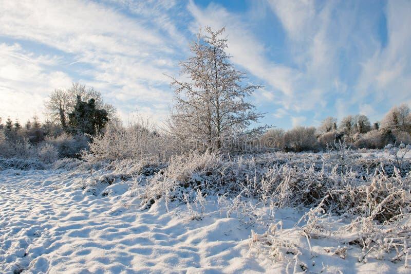 De winterdag in het land stock foto