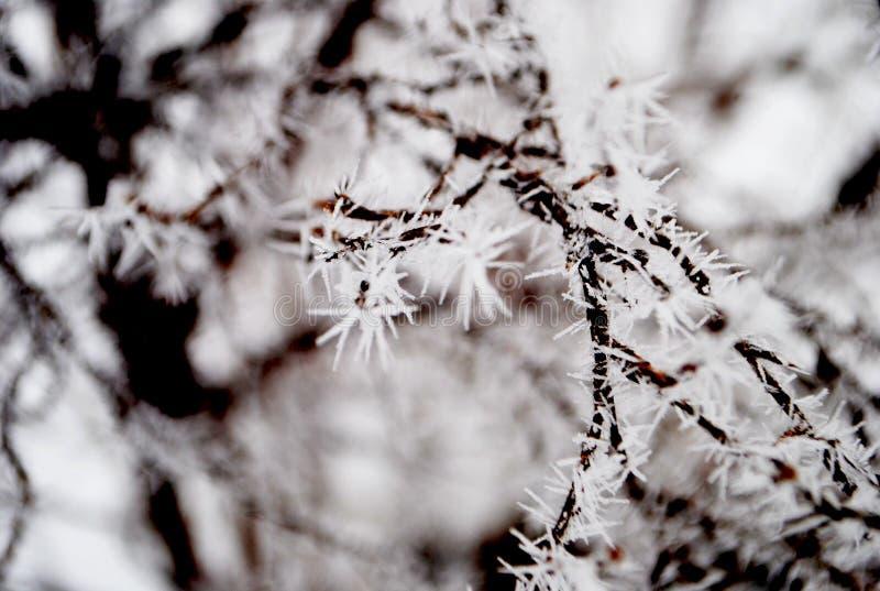 De winterdoornen stock afbeelding