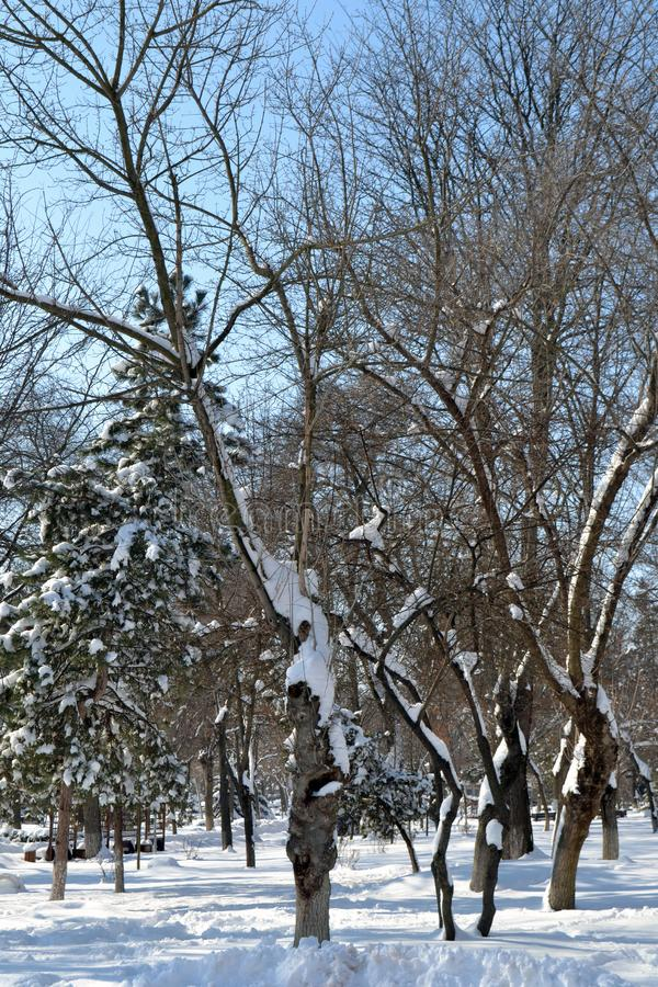 De winterdroom in 3 Maart royalty-vrije stock fotografie