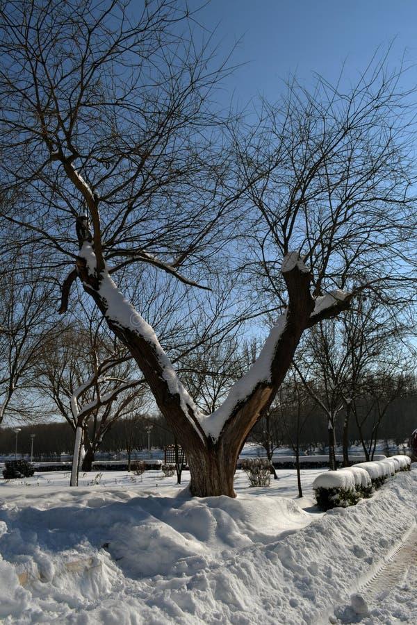 De winterdroom in 4 Maart stock fotografie