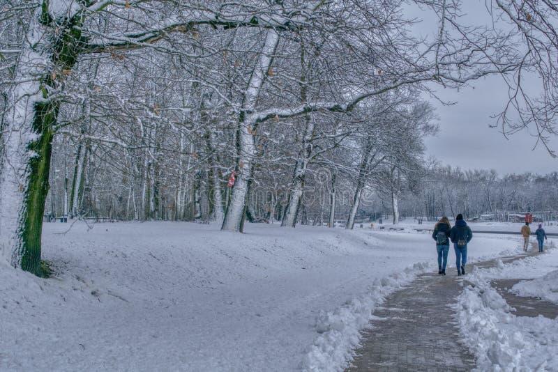 De wintergangen in het park stock foto's