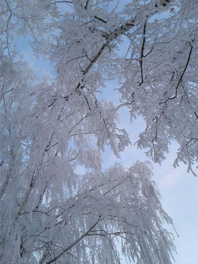 De winterhemel tussen bomen januari 2017 stock foto