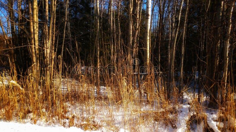 De winterhooi royalty-vrije stock afbeeldingen