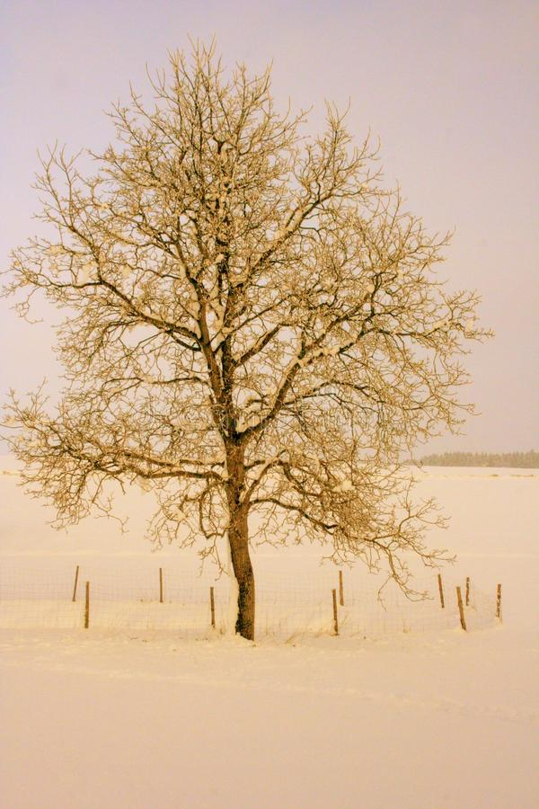 De winterlandschap stock foto's