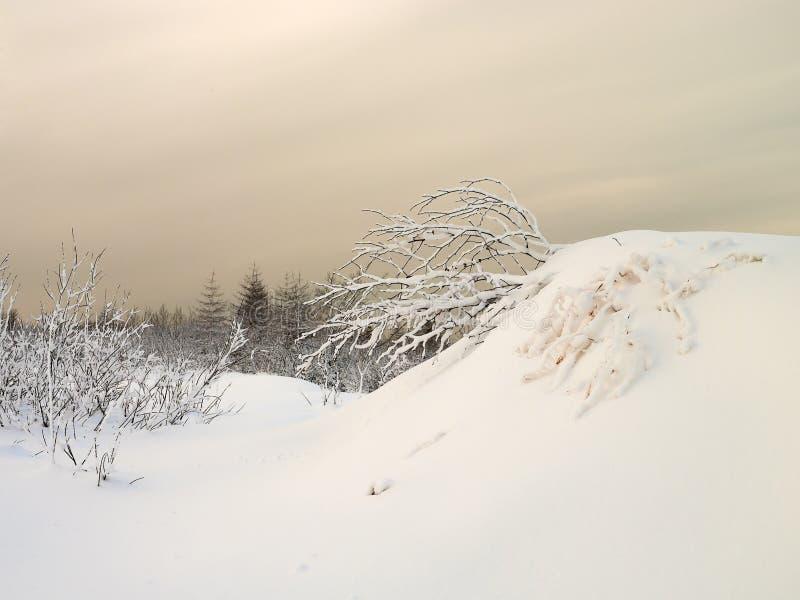 De winterlandschap 4. royalty-vrije stock afbeeldingen