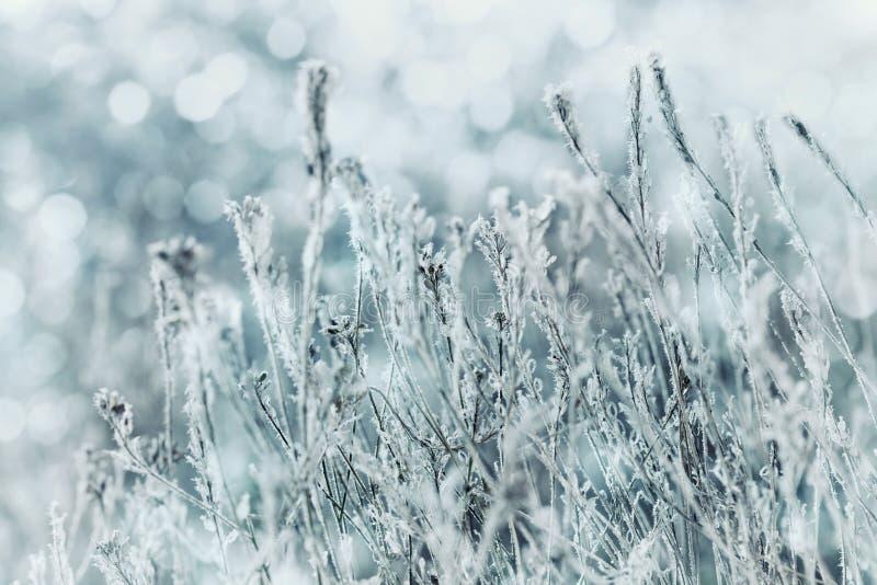 De winterlandschap of achtergrond van blauwe bloemen in de sneeuw en vorst op een koude dag Macro Aard Mooie ingesneeuwde weide royalty-vrije stock afbeelding