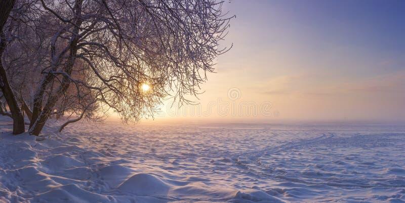De winterlandschap in de avond bij zonsondergang Sneeuw, vorst in januari De Achtergrond van de Aard van de winter Bomen in Zonli royalty-vrije stock fotografie