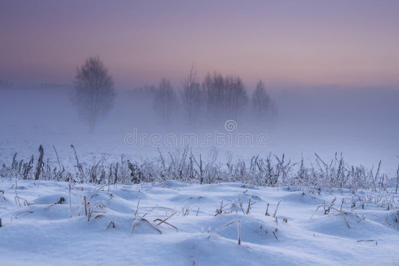 De winterlandschap bij dageraad Sneeuw de winteraard in de vroege ochtend De achtergrond van Kerstmis Mistig en ijzig landschap m stock foto