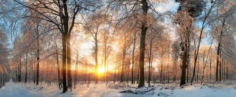 De winterlandschap bij zonsondergang in een bos stock afbeelding