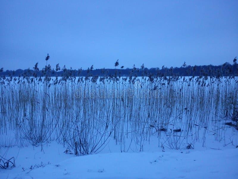 De winterlandschap - blauw uur royalty-vrije stock fotografie