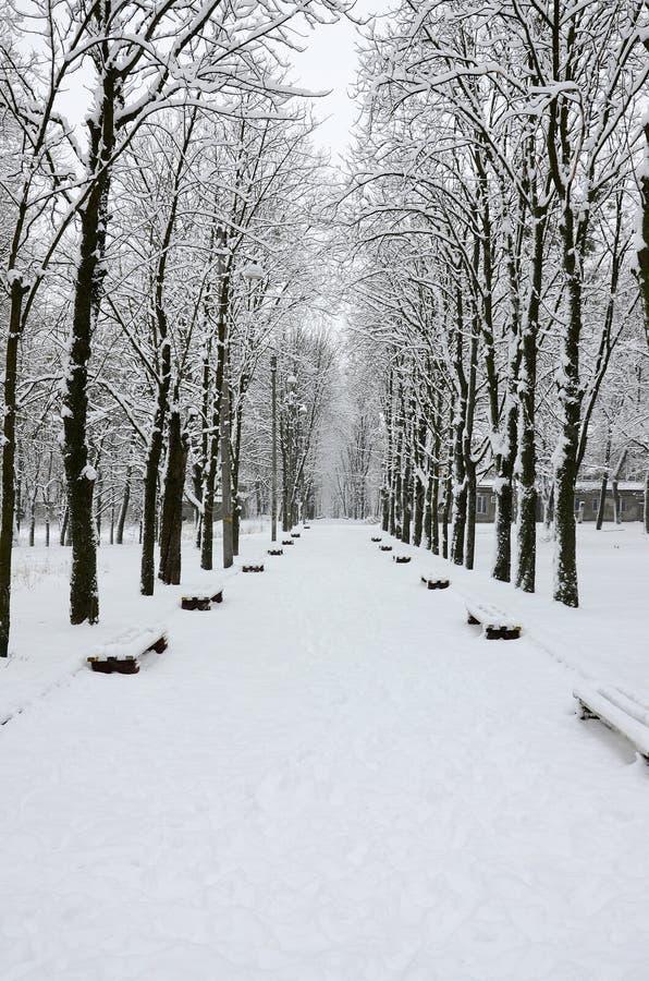 De winterlandschap in een snow-covered park na een zware natte sneeuwval Een dikke laag van sneeuw ligt op de takken van bomen stock foto's