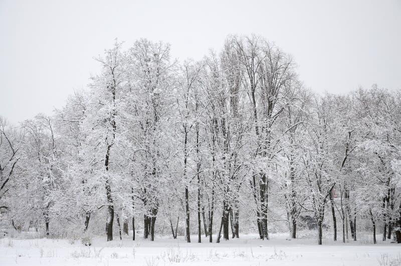 De winterlandschap in een snow-covered park na een zware natte sneeuwval Een dikke laag van sneeuw ligt op de takken van bomen stock fotografie