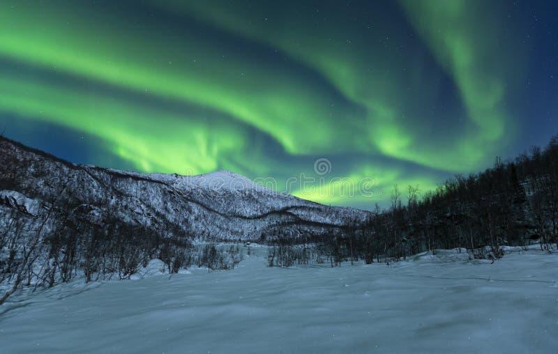 De winterlandschap met aurora borealis wordt gekruid dat stock afbeelding
