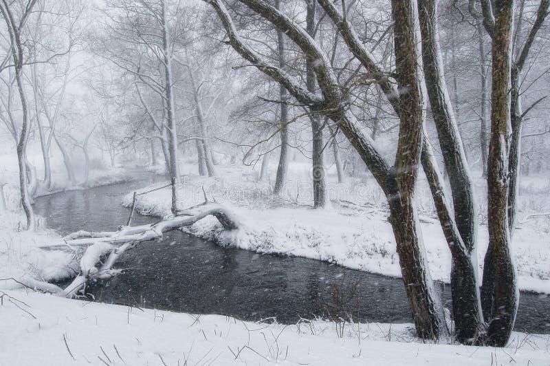 De winterlandschap met blizzard in het bos stock afbeeldingen