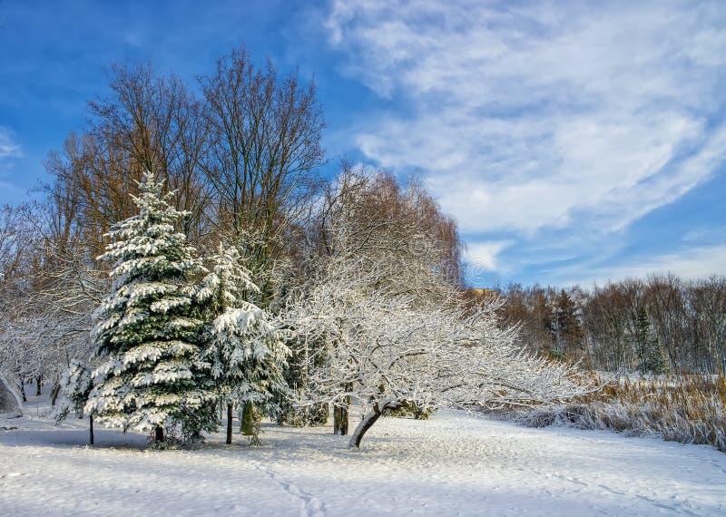 De winterlandschap met bomen door verse sneeuw tegen blauwe hemel worden behandeld die royalty-vrije stock afbeeldingen