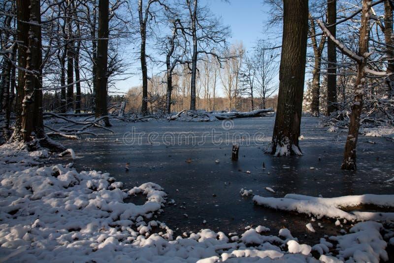 De winterlandschap met bomen op een bevroren open plek stock afbeeldingen