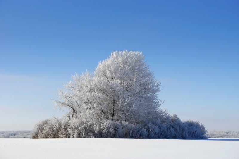 De winterlandschap met boom met rijp wordt behandeld die stock afbeelding
