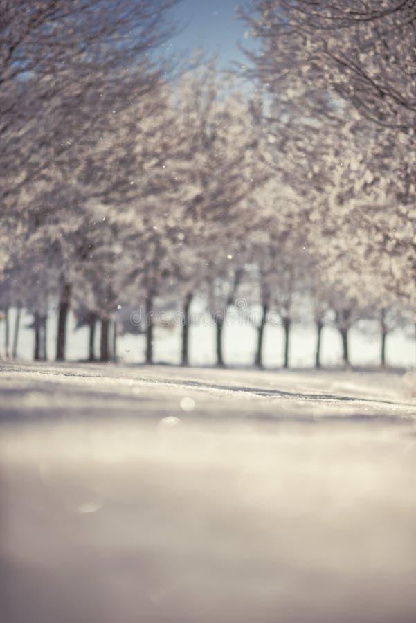 De winterlandschap met boomsteeg, bevroren de winterfotografie stock foto's