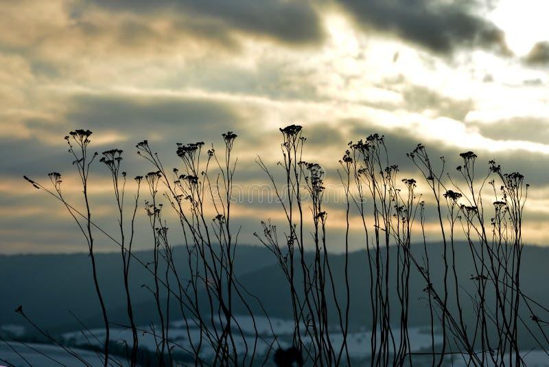 De winterlandschap met de zonsopgang en de hoge installaties royalty-vrije stock afbeeldingen