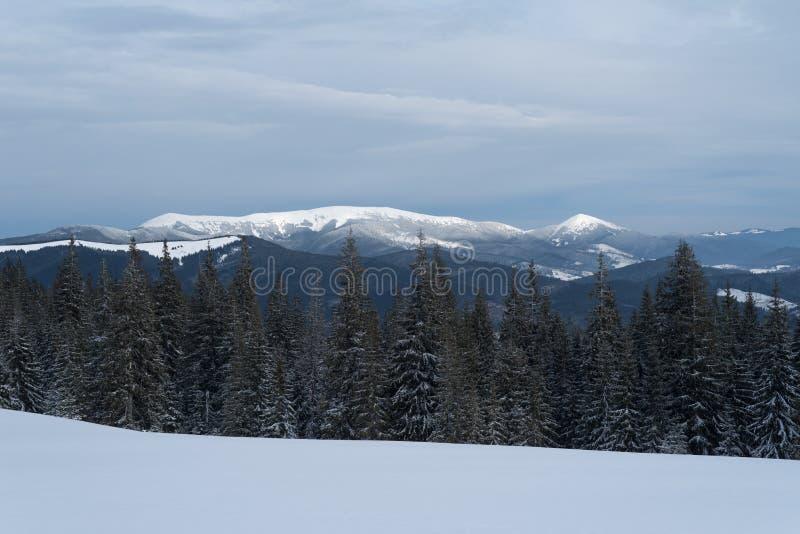 De winterlandschap met een berg hoogste en net bos in va stock afbeelding