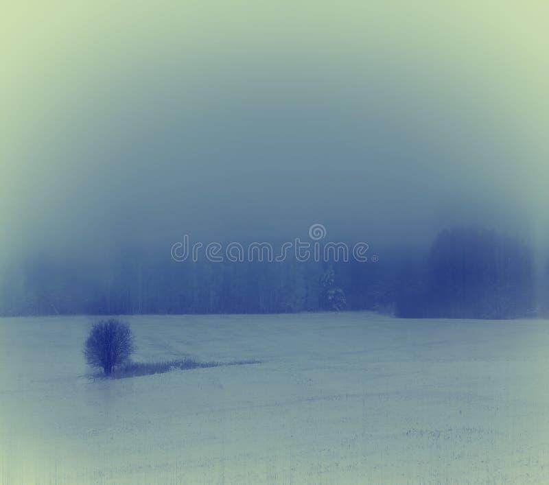 De winterlandschap met een eenzame boom stock foto