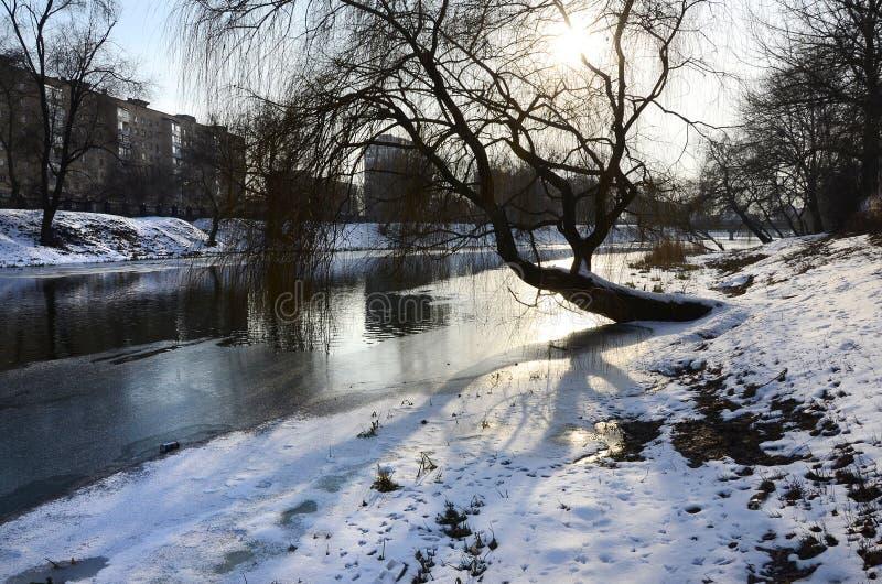De winterlandschap met een grote boom door de rivier stock afbeeldingen