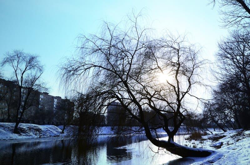 De winterlandschap met een grote boom door de rivier stock foto's