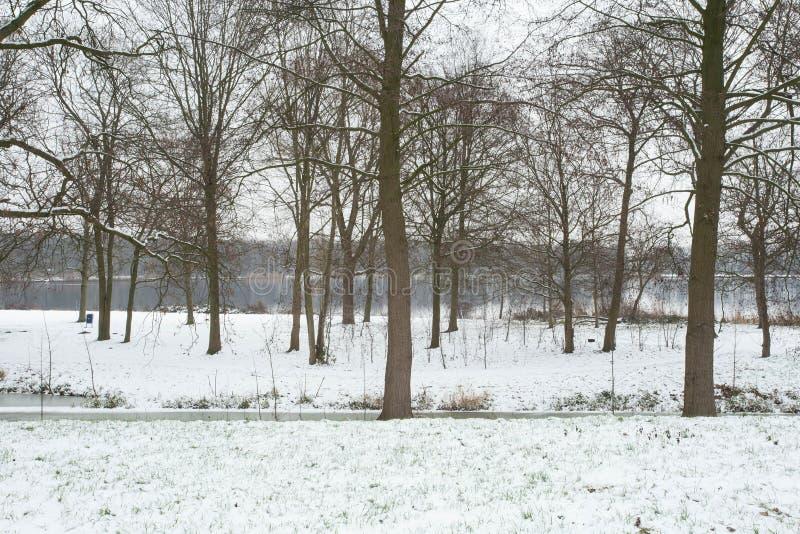 De winterlandschap met een meer en bomen met sneeuw, witte wintertijd wordt behandeld die stock afbeelding