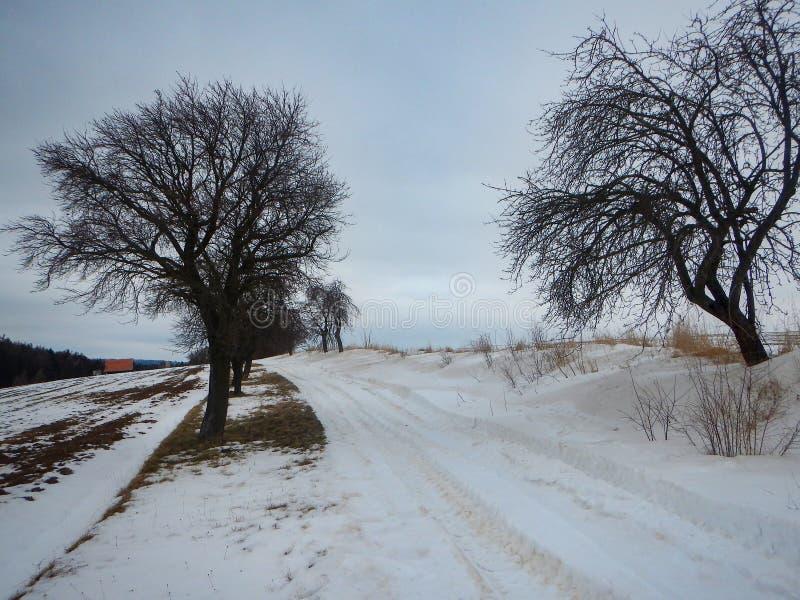 De winterlandschap met een sneeuw behandeld gebied royalty-vrije stock fotografie