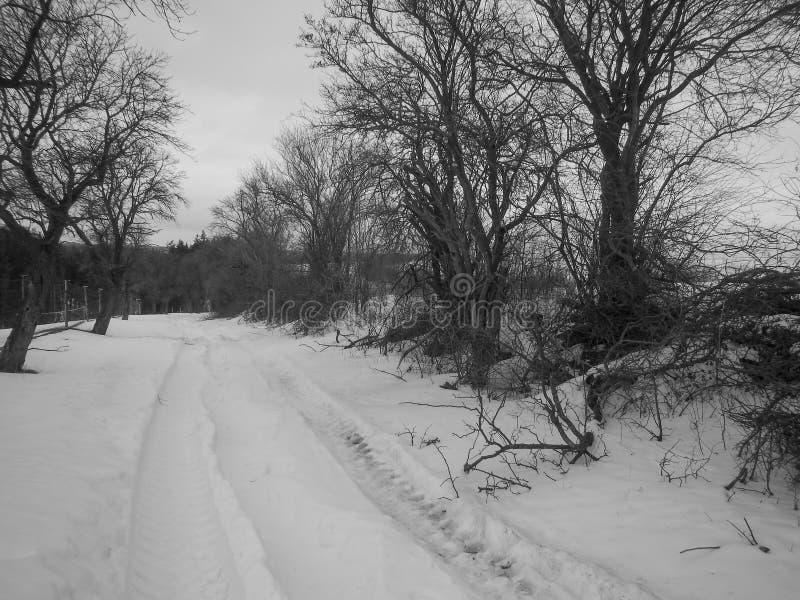 De winterlandschap met een sneeuw behandeld gebied stock foto's