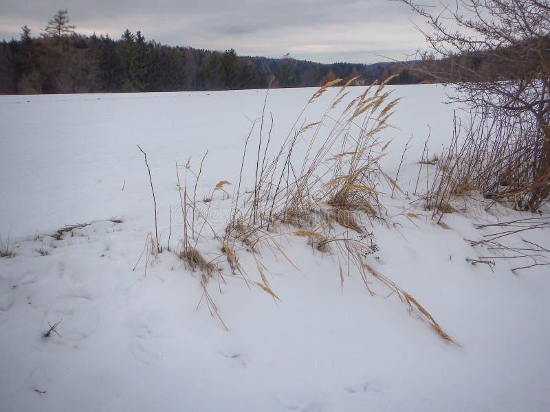 De winterlandschap met een sneeuw behandeld gebied royalty-vrije stock foto