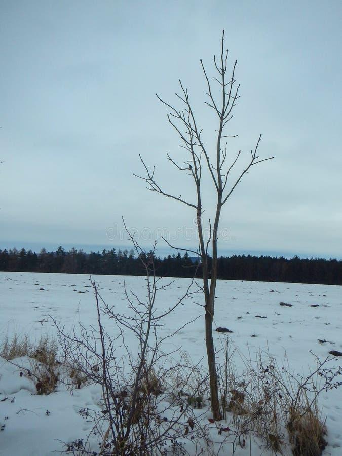 De winterlandschap met een sneeuw behandeld gebied royalty-vrije stock afbeelding