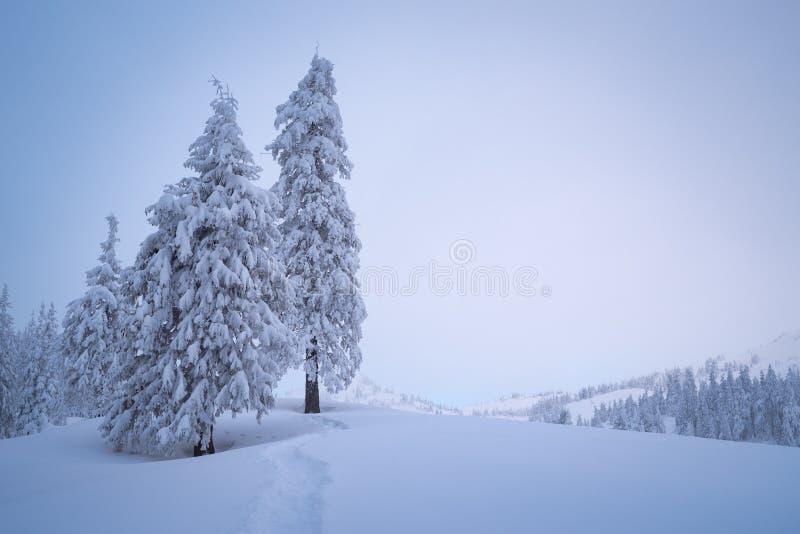 De winterlandschap met exemplaarruimte en sparren royalty-vrije stock foto's