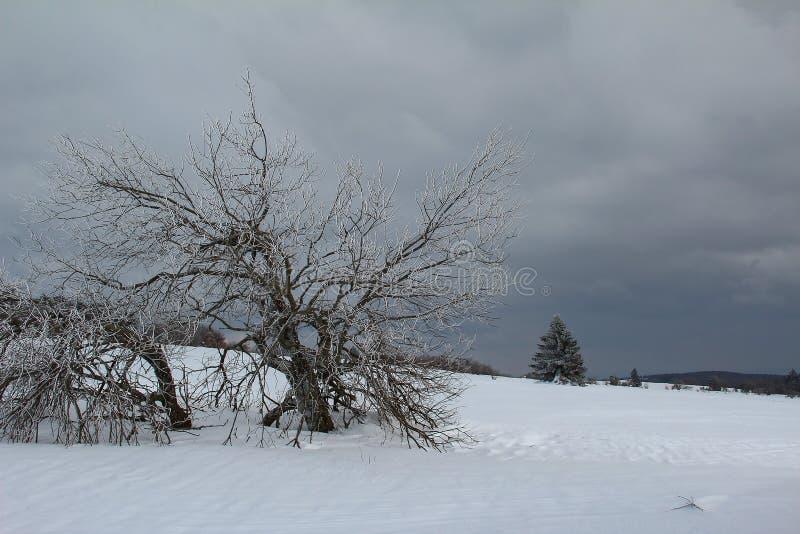 De winterlandschap met heel wat sneeuw stock fotografie