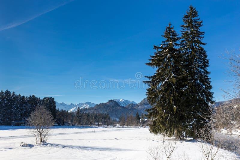 De winterlandschap met naaldboom stock foto's