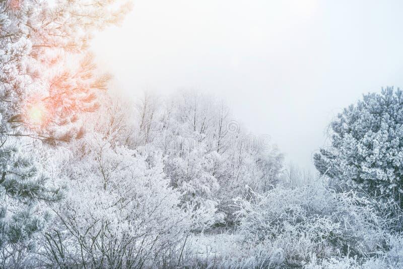 De winterlandschap met sneeuw behandelde bomen in vroeg ochtendzonlicht stock fotografie
