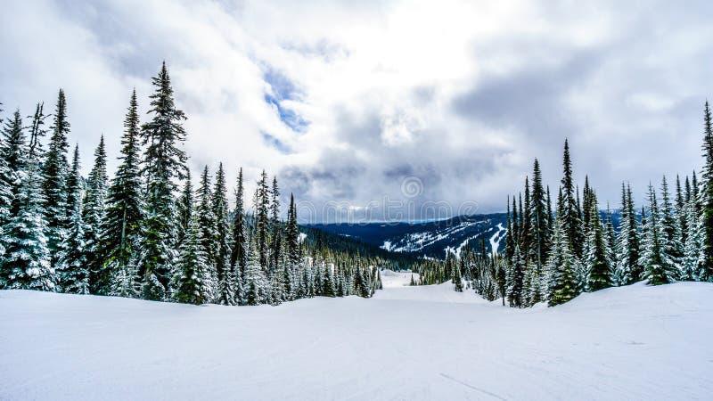 De winterlandschap met Sneeuw Behandelde Pijnboombomen in Hoge Alpien royalty-vrije stock afbeeldingen